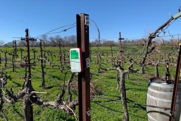 soil moisture meter in vineyard