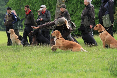 Ruby is sent off on a blind retrieve.