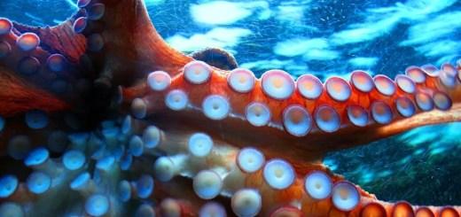 MISMO Blueprint... The Evil Octopus - AppraisersBlogs