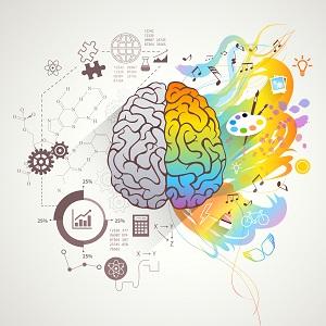 Cerveau - connaissances