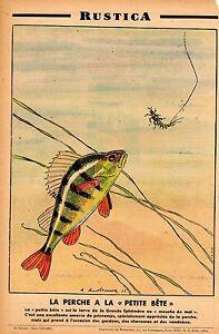Pêche à la petite bête