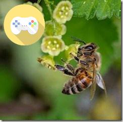 abeille ou jeu