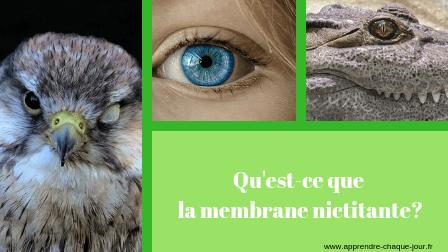 la membrane nictitante