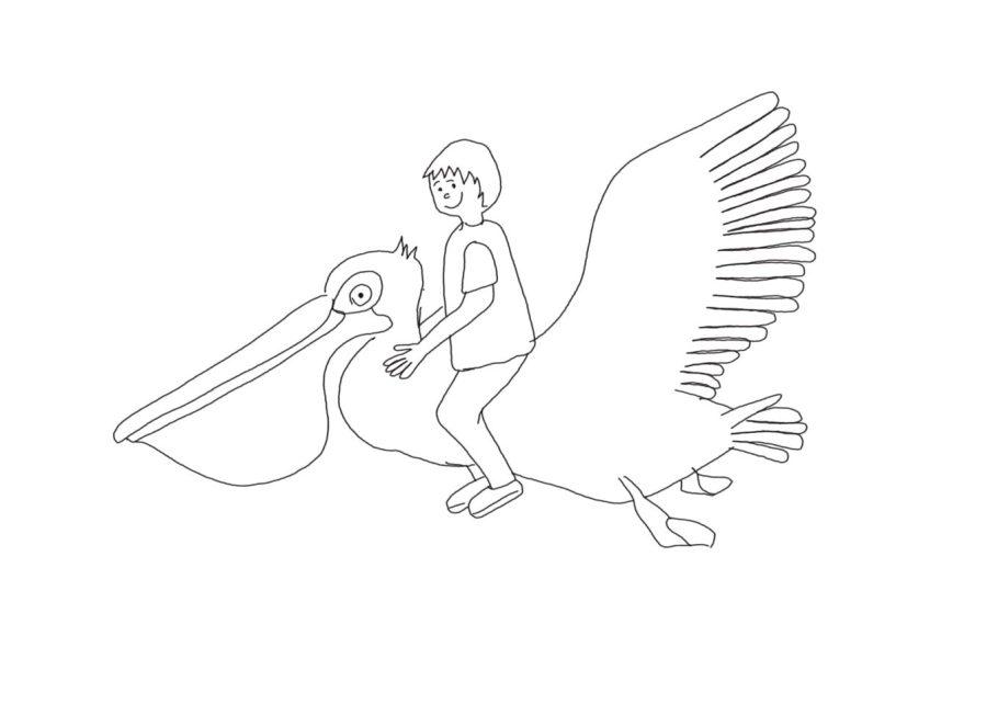 dessiner un pelican facilement