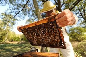 apiculteur-miel