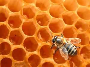 miel abeille