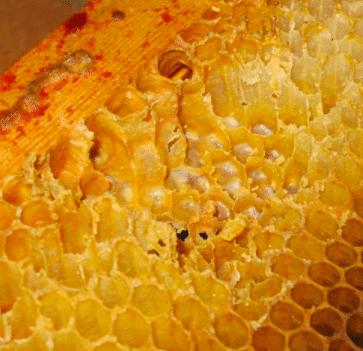 pillage ruche