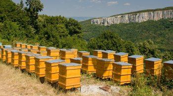 dérive dans le rucher
