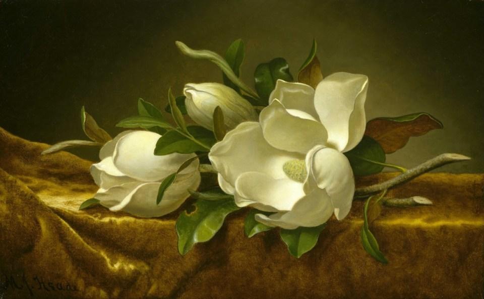 Magnolias sur tissu de velours doré, Martin Johnson Heade , 1888/1890