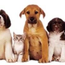 animaux savoir-vivre règles politesse, animaux pets étiquette biensénace, dressage animaux réussi savoir-vivre protocoel bienséance manières à table arts de la table recevoir réception mariage