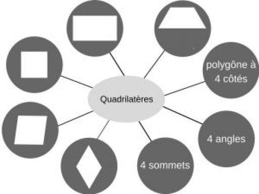 cartes web Quadrilatères