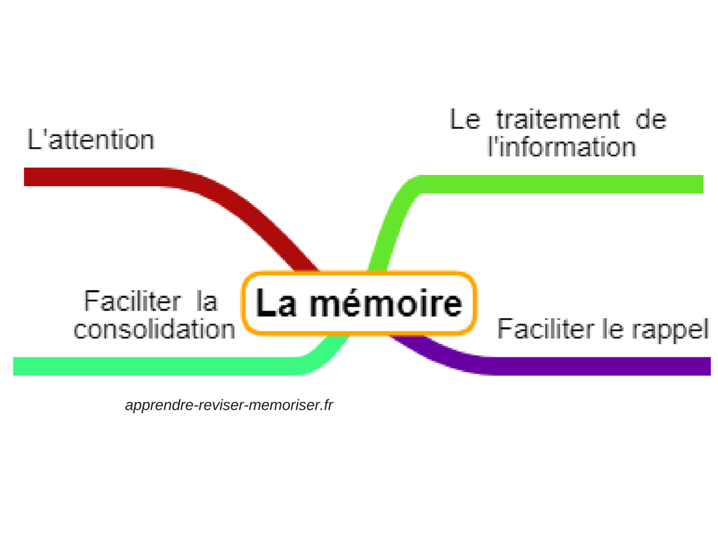 mémoire apprentissage neurosciences