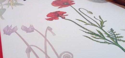 album enfant plantes