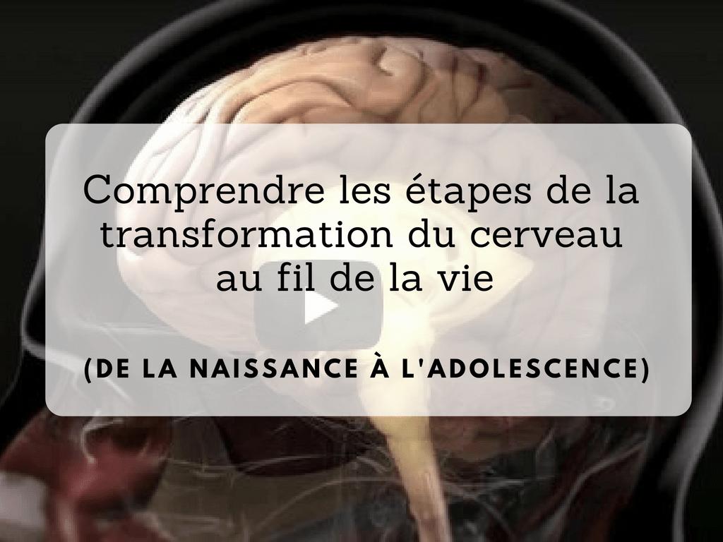 Comprendre les étapes de la transformation du cerveau au fil de la vie