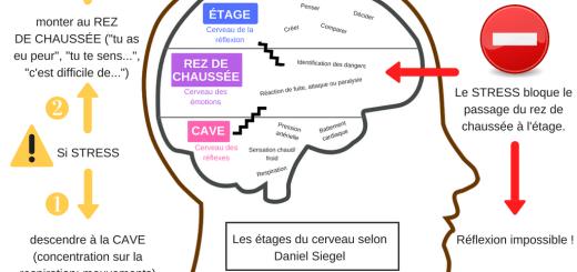 étages du cerveau gestion de classe