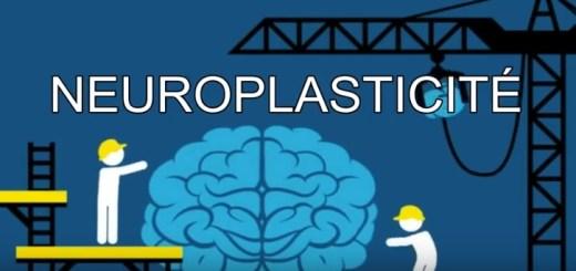 vidéo neuroplasticité neurosiences école