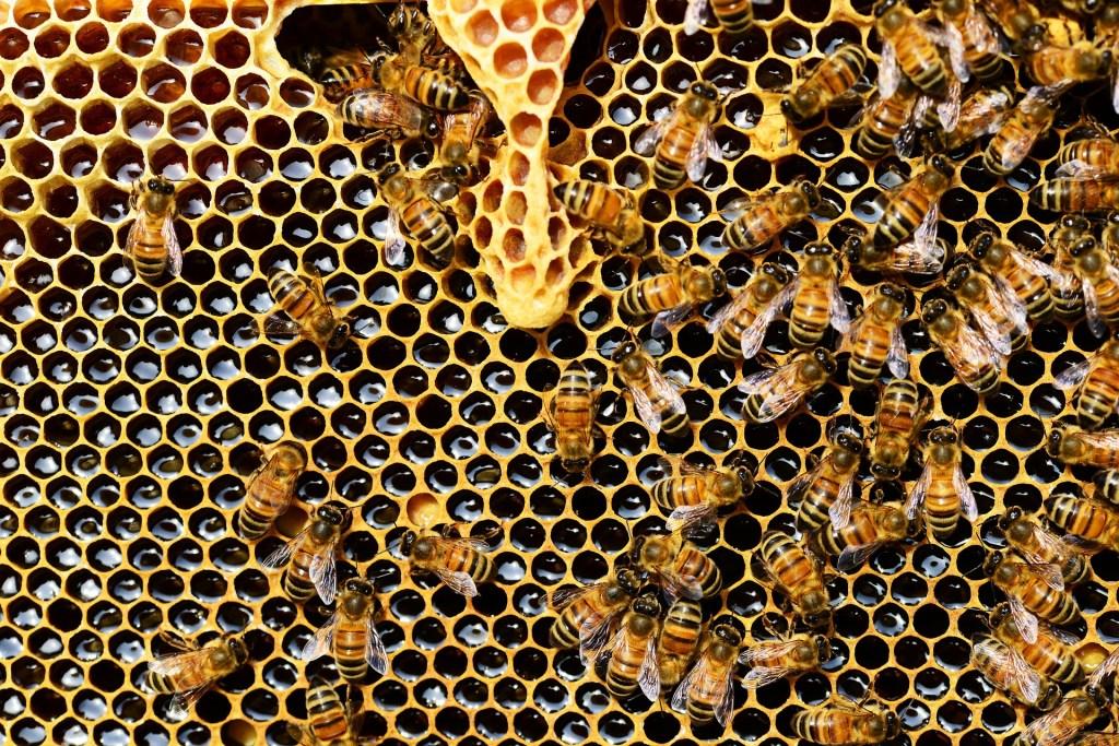le miel et les abeilles