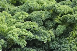 chou kale pour maigrir