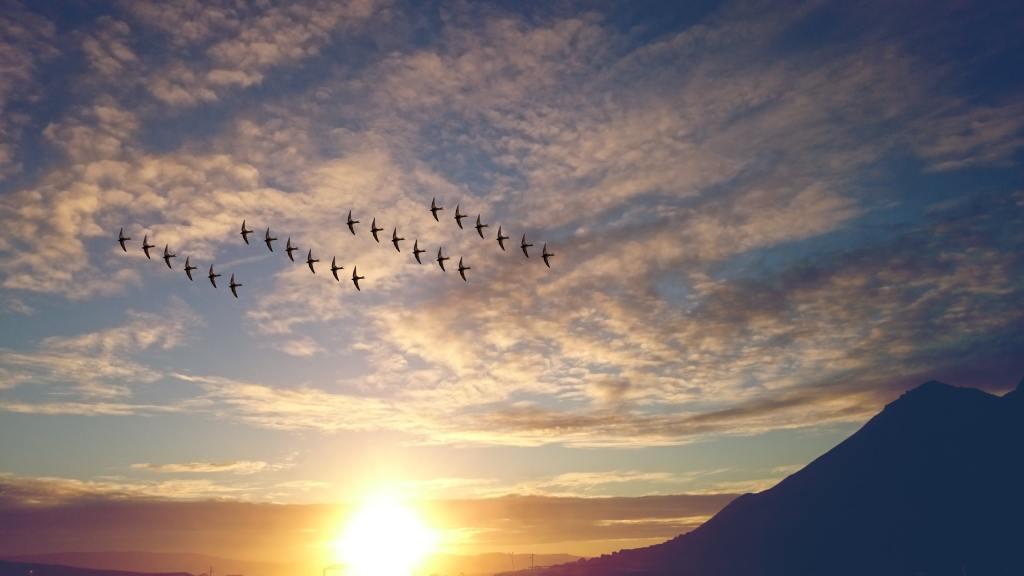 Birds of a feather flock together : Traduction en français