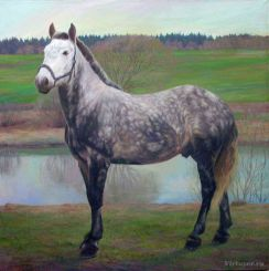 Portrait d'un cheval. Printemps. 70x80 Huile sur toile