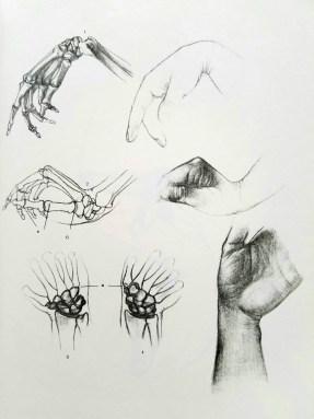 dessiner les mains. anatomie 3