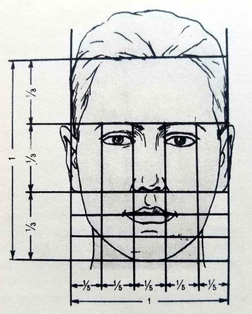 Proportions du visage.
