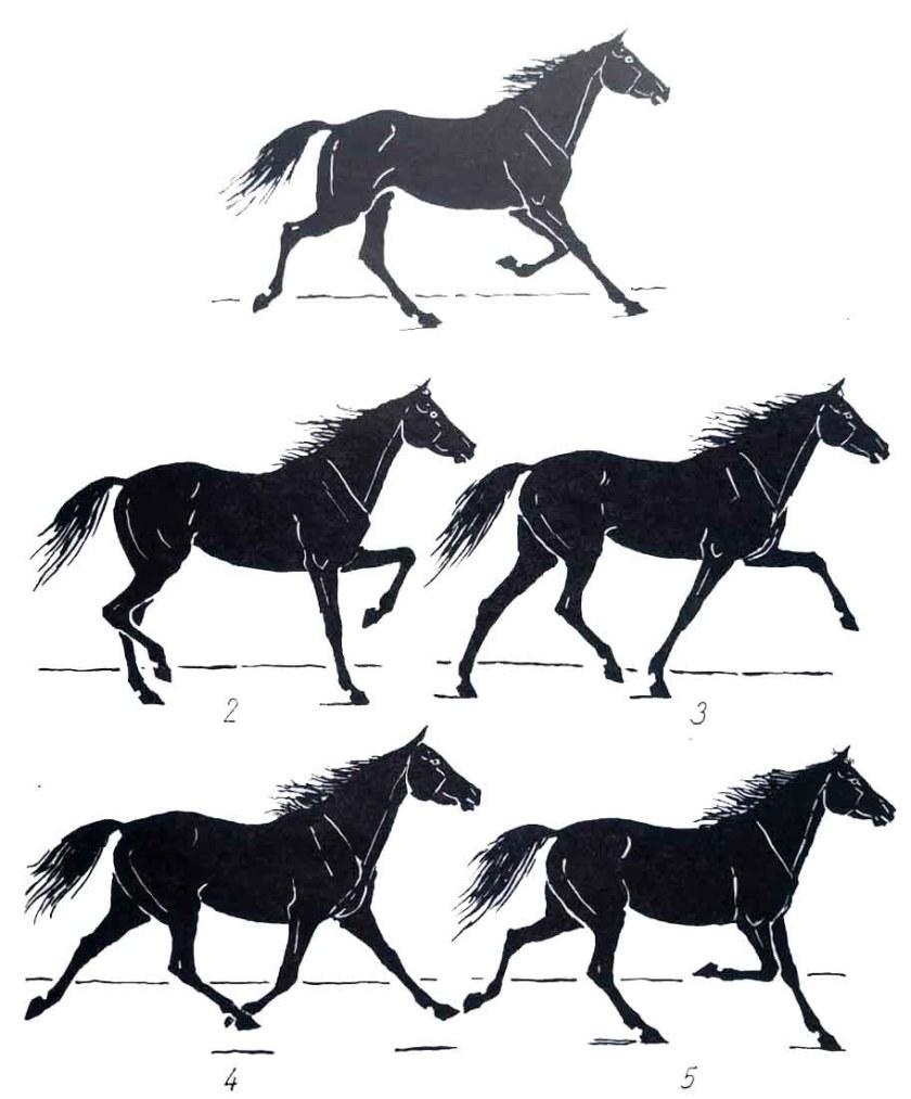 Les allures du cheval. Le trot