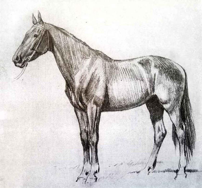 Comment dessiner un cheval. Etape 2.