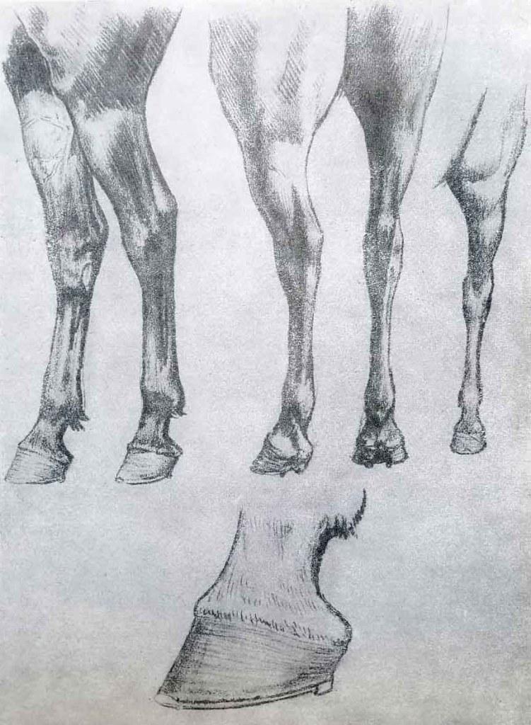 les jambes postérieures du cheval