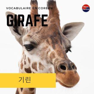 1-girafe