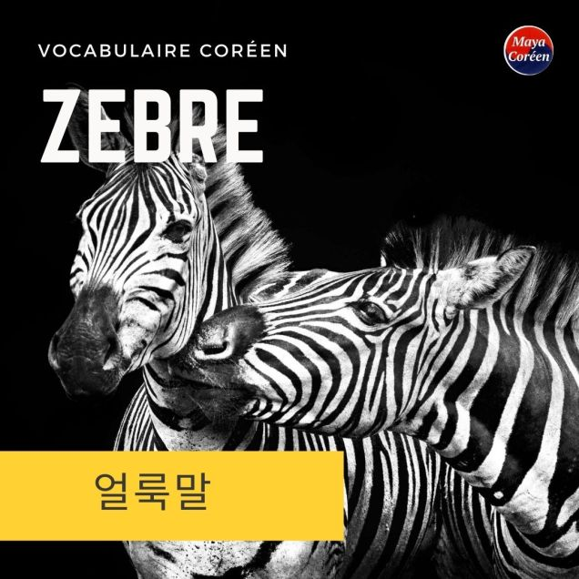 2-zebre