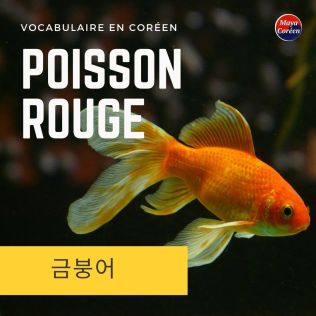 7-poisson-rouge