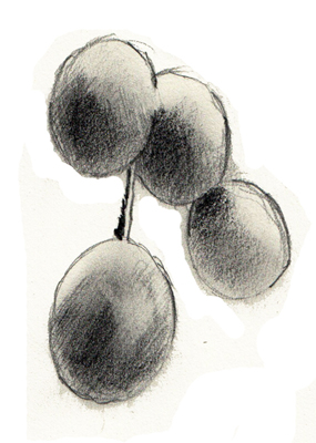 grains-raisins