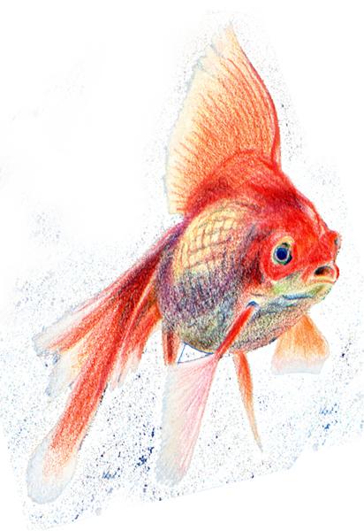 Comment dessiner un poisson apprenez a - Dessiner un poisson facilement ...