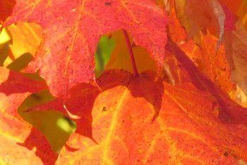 """feuilles e1484839101623 - La méditation a un effet """"retardateur"""" sur le vieillissement du cerveau"""