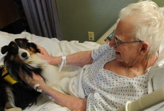 Animaux conversation e1516633718844 - Les animaux: ces semblables qui nous aident
