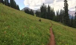 Trail in wildflowers