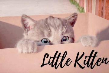 Little Kitten - My Favorite Cat