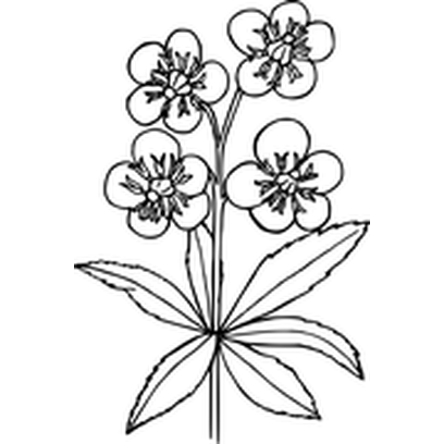 Flower Stickers Black And White By Howtobewebsmart
