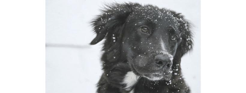 [Cani] 3 letture consigliate per difendere dal freddo i nostri quattrozampe!