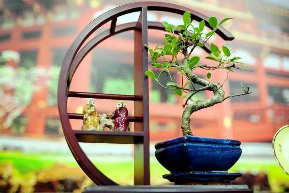 Nel Bonsai, creatività e giardinaggio orientali