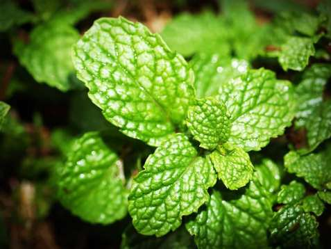 Olio essenziale: 10 profumi usati nei prodotti per il corpo delle donne