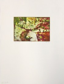 Margaret Craig; Bad Birds: Pigion Joy, 1996; Photo etching; Image: 152 mm x 222 mm