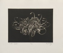 "Douglas Bosley; Grevilea, 2014; Mezzotint; Paper size: 358 x 285 mm; from, ""Trash: A Printmaking Portfolio Exchange"""
