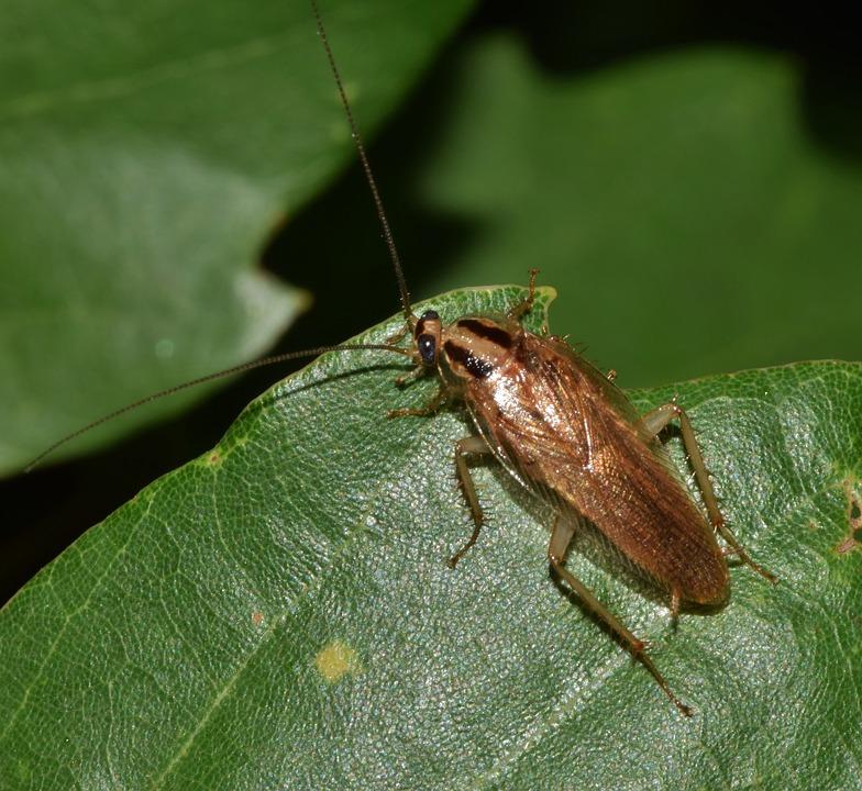 roach on a leaf