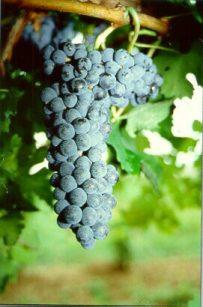 Las Webs del Vino