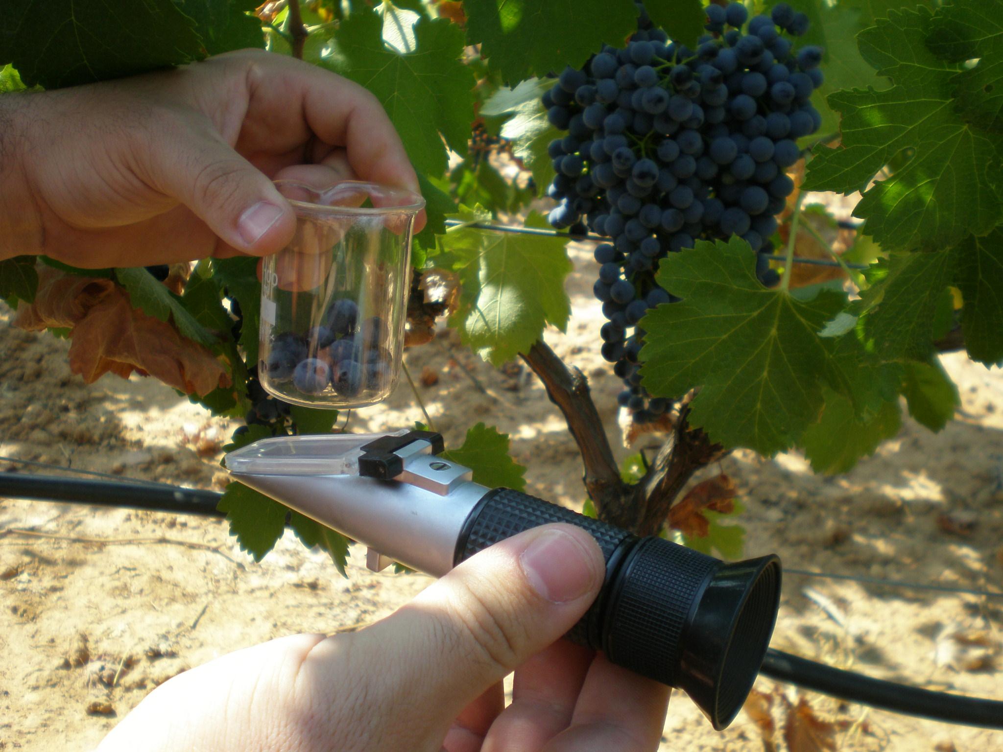 Aprende a catar vino