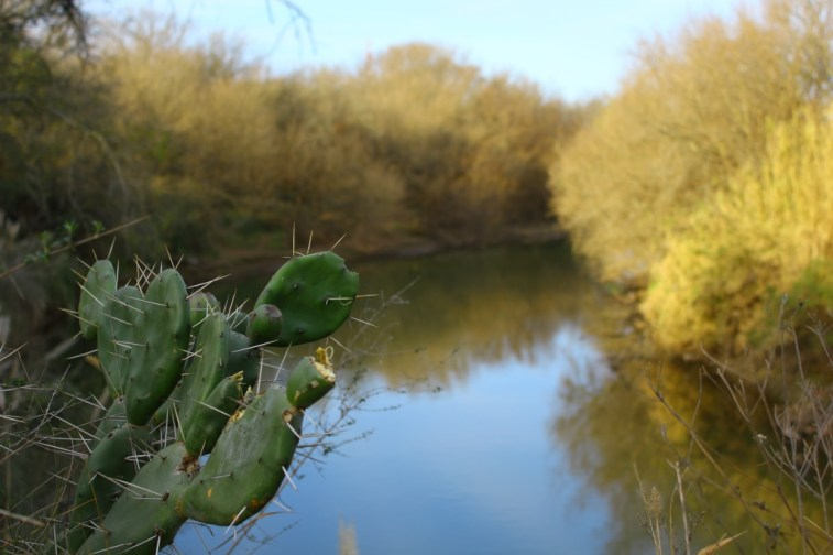 Cactus Rio Ctalamuchita SM
