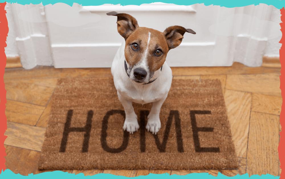 Post 49. La llegada a casa teniendo perro.