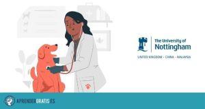 Aprender Gratis | Curso de técnicas diagnósticas para perros